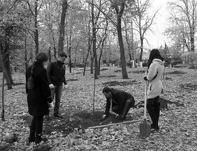 идет посадка деревьев; пустые ямки – отсюда деревья украли